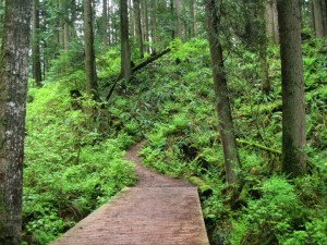 UBC Forest Trail